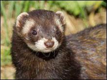 Ces drôles d'animaux vivant sous la terre. - Lecture - REPORTAGES pour enfant - Fiches pédagogiques sur les animaux