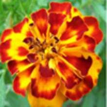 Apprends à cultiver des fleurs! - Lecture - REPORTAGES pour enfant - Divers