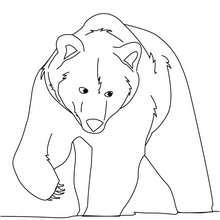Cours anim s de dessin dessiner un ours - Dessin d un ours ...
