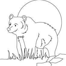 Coloriage d'un ours au crépuscule - Coloriage - Coloriage ANIMAUX - Coloriage ANIMAUX DE LA FORET - Coloriage OURS