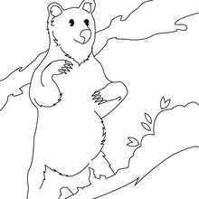 Coloriage d'un ours dressé sur ses pattes arrières