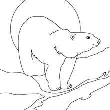 Coloriage d'un ours qui se désaltère à la rivière - Coloriage - Coloriage ANIMAUX - Coloriage ANIMAUX DE LA FORET - Coloriage OURS