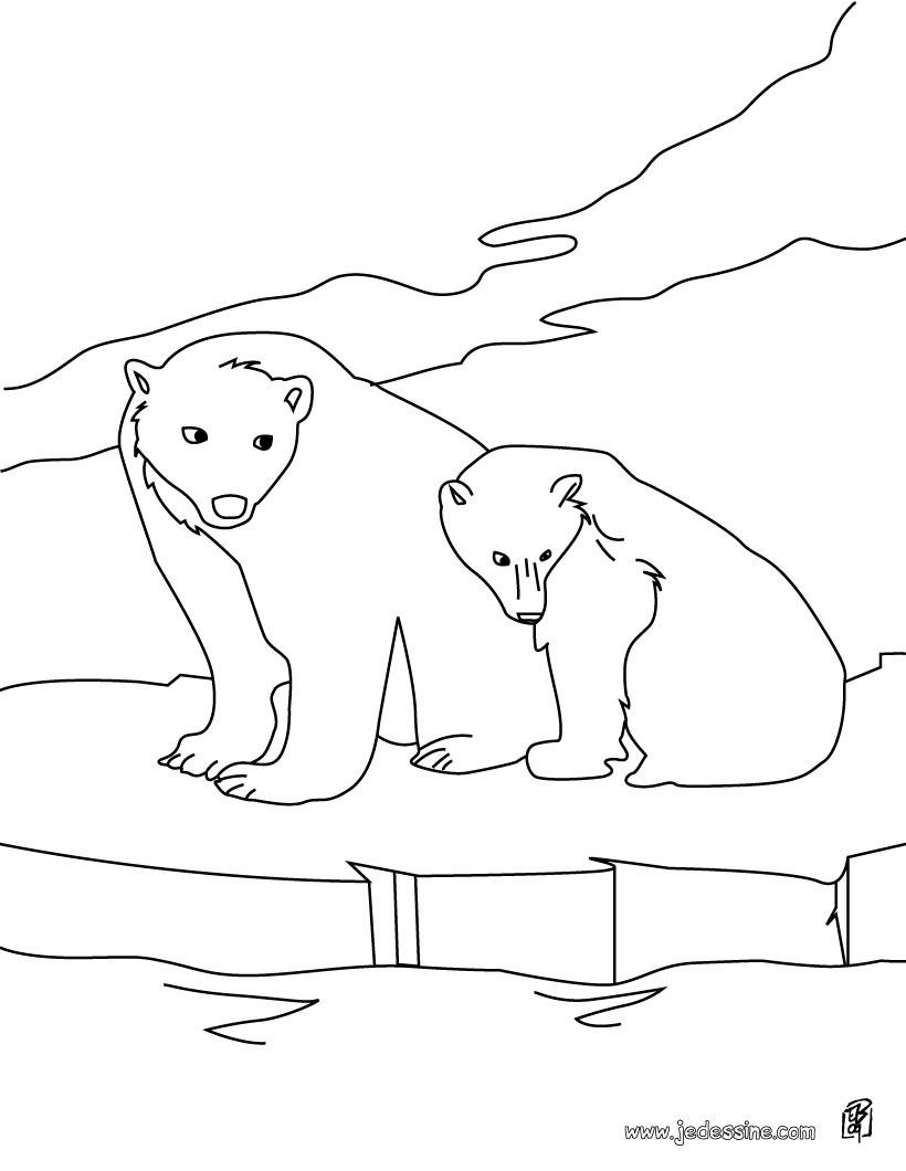 Coloriages coloriage d 39 un ours et son petit sur la - Dessin d un ours ...