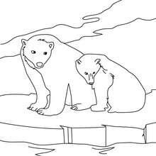 Coloriage d'un ours et son petit sur la banquise