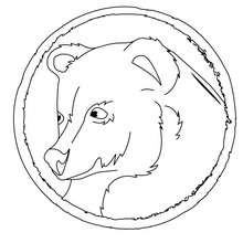 Coloriage du portrait d'un ours - Coloriage - Coloriage ANIMAUX - Coloriage ANIMAUX DE LA FORET - Coloriage OURS