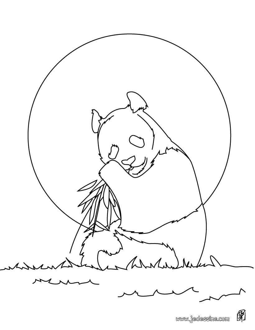Coloriages coloriage d 39 un ours qui mange des racines fr - Dessin d un ours ...