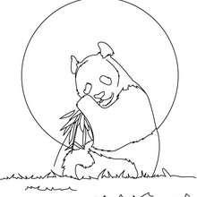 Coloriage d'un ours qui mange des racines