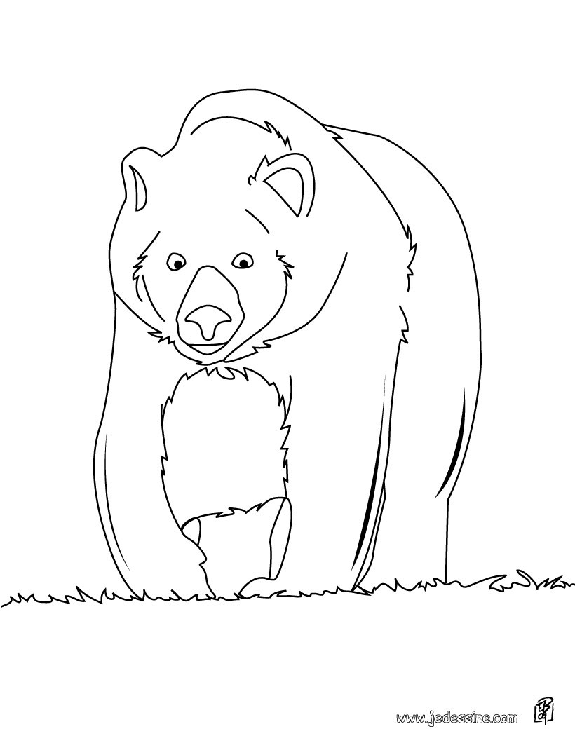Coloriages coloriage d 39 un ours qui se prom ne fr - Dessin d un ours ...