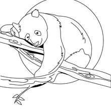 Coloriage d'un ourson endormi sur une branche