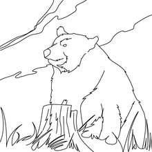 Coloriage ours coloriages coloriage imprimer gratuit - Dessin d un ours ...