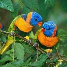 animaux, Coloriage d'Oiseaux