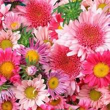 Saint Valentin, Le langage des fleurs