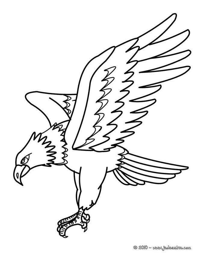 Coloriages coloriage d 39 un aigle pygargue - Dessin de aigle ...