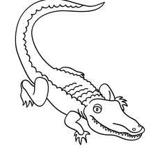 Coloriage de crocodile - Coloriage - Coloriage ANIMAUX - Coloriage ANIMAUX DE LA JUNGLE - Coloriage CROCODILE