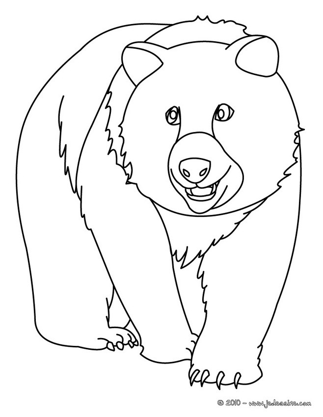 Coloriages coloriage d 39 un ours - Dessin d un ours ...