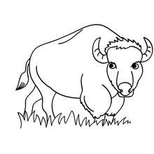 Coloriages bison colorier - Coloriage bison ...