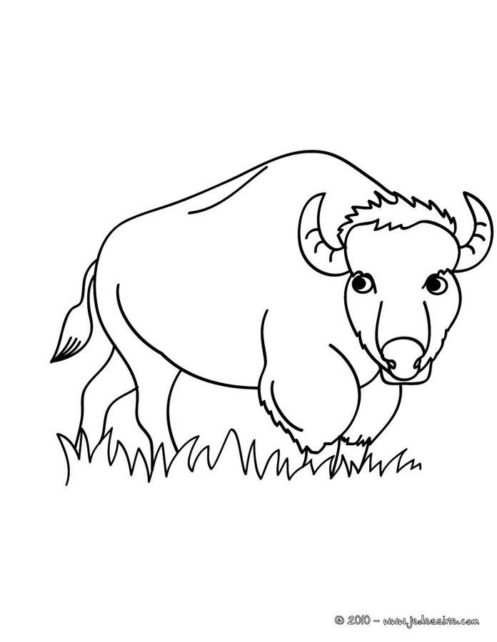 comment dessiner un bison
