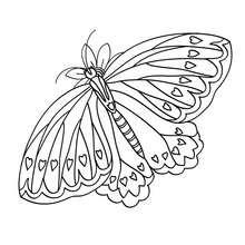 Coloriage : Papillon à coeurs
