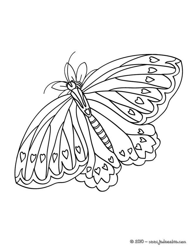 Dessin à Imprimer Papillon
