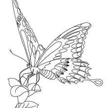 Coloriage : Papillon posé sur une fleur