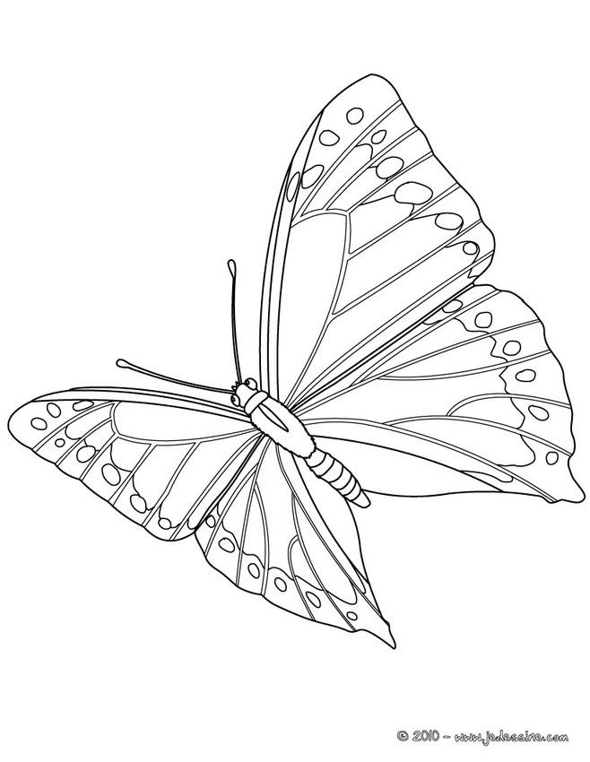 Coloriage Papillon Et Abeille.Coloriages De Papillons Coloriages Coloriage A Imprimer Gratuit