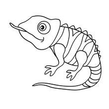 Coloriage d'un bébé CAMELEON - Coloriage - Coloriage ANIMAUX - Coloriage ANIMAUX DE LA JUNGLE - Coloriage CAMELEON