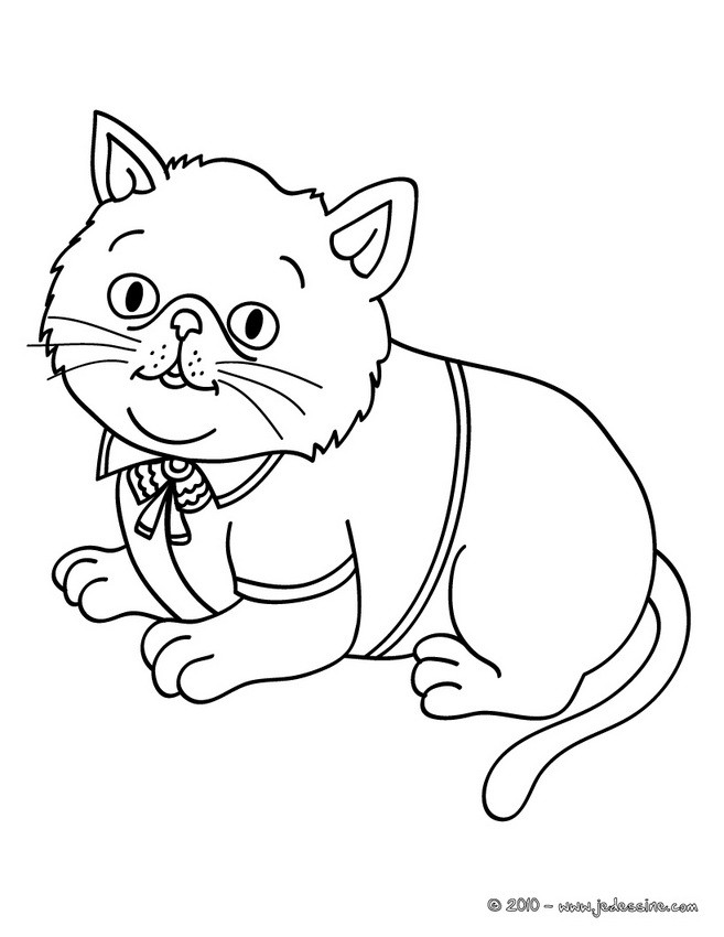Coloriages chat habill - Modele dessin chat facile ...