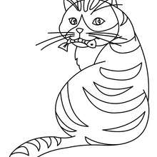 Coloriage : Chat mangeant du poisson