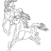 Coloriage : Chevaux galopants