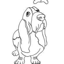 Coloriage de chien : Basset