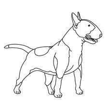 Coloriage de chien : Bull terrier