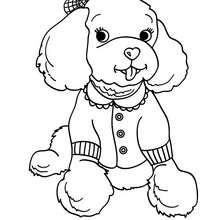 Coloriage de chien : Caniche