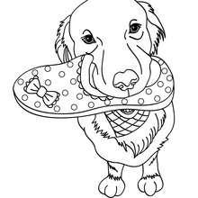 Coloriage de chien : Chien qui ramène sa pantoufle à son maître