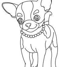 Coloriage de chien : Chihuahua