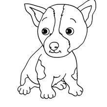Coloriage de chien : Chiot