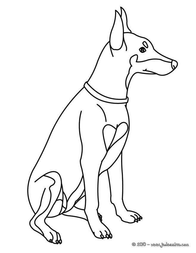 Coloriages dobermann - Coloriage chien ...