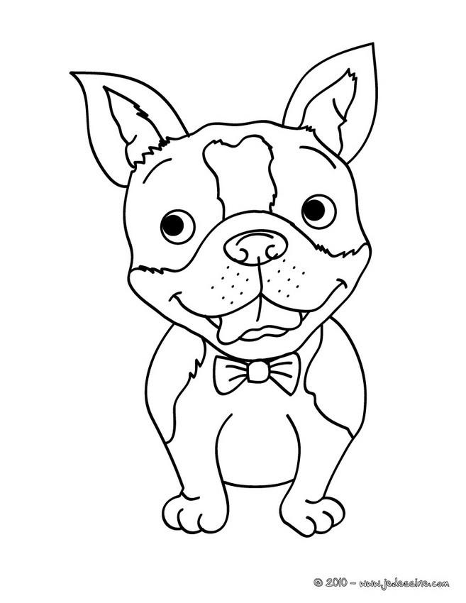 Coloriages petit chien en noeud papillon - Noeud coloriage ...