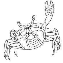 Crabe coloriages vid os et tutoriels activites - Dessiner un crabe ...