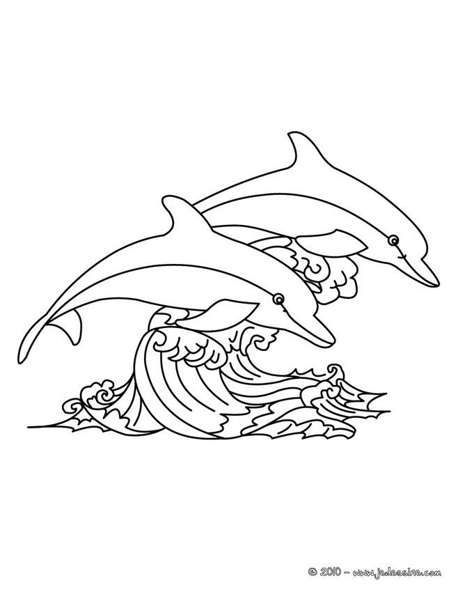 coloriage dun couple de dauphins en mer - Dauphin A Imprimer