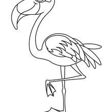Coloriage d'un mâle flamand rose - Coloriage - Coloriage ANIMAUX - Coloriage OISEAU - Coloriage FLAMAND ROSE