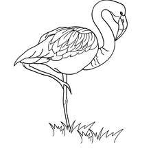 Coloriage d'un flamand - Coloriage - Coloriage ANIMAUX - Coloriage OISEAU - Coloriage FLAMAND ROSE