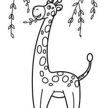 Coloriage d'une GIRAFE dans les arbres - Coloriage - Coloriage ANIMAUX - Coloriage ANIMAUX AFRIQUE - Coloriage GIRAFE