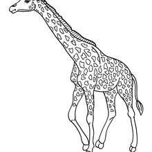 Coloriage d'une GIRAFE dans la savane - Coloriage - Coloriage ANIMAUX - Coloriage ANIMAUX AFRIQUE - Coloriage GIRAFE