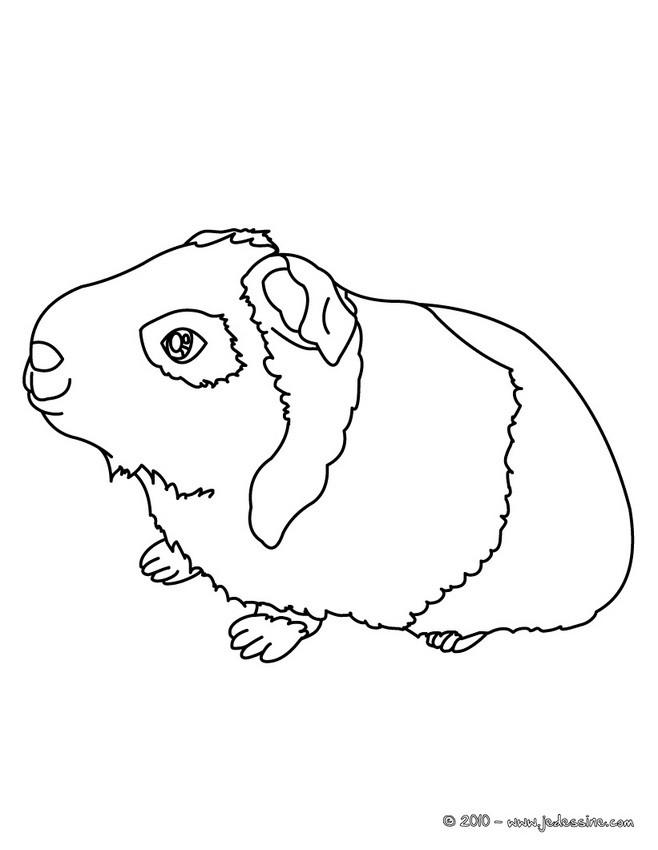 Coloriages coloriage d 39 un cochon d 39 inde imprimer fr for Free guinea pig coloring pages