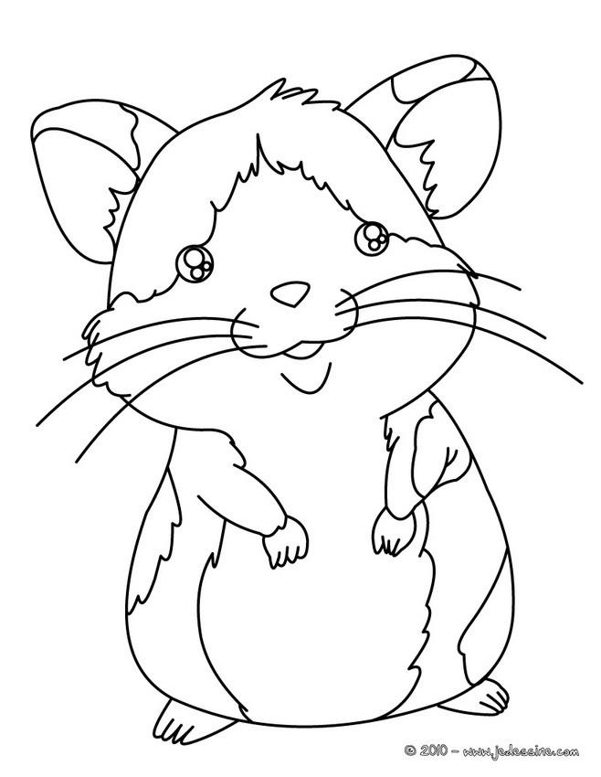 Coloriages De Hamsters Coloriages Coloriage A Imprimer Gratuit
