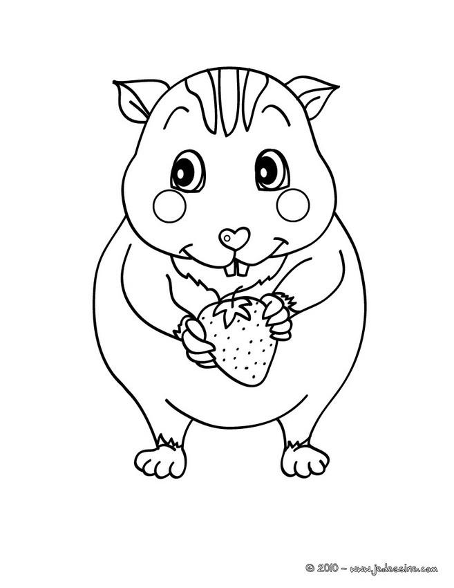 Coloriages coloriage d 39 un b b hamster - Hamster gratuit ...