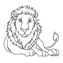 Coloriage : LION à colorier