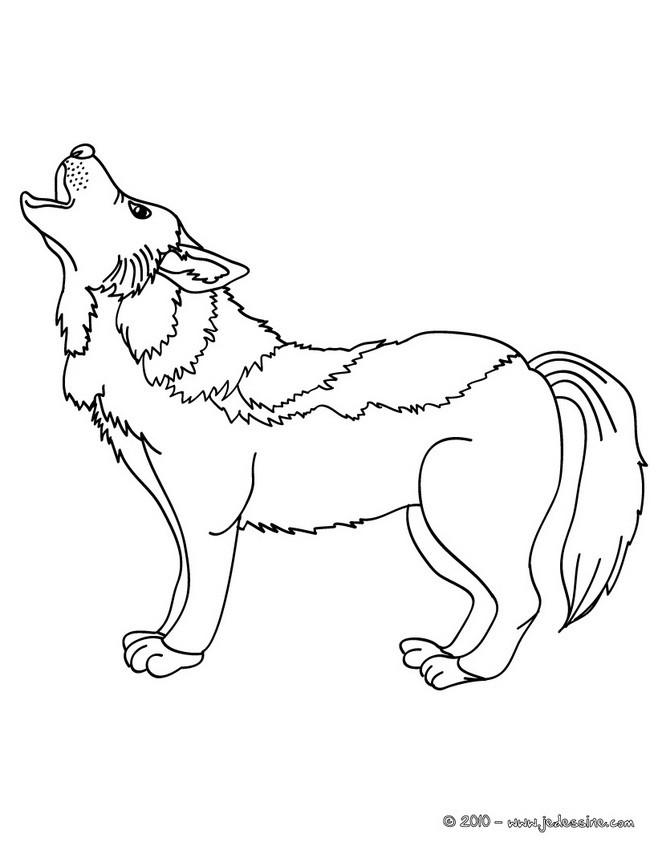 Coloriages coloriage d 39 un canis lupus - Image loup dessin ...