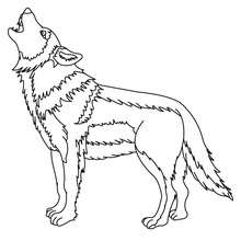 Coloriage d'un LOUP gris - Coloriage - Coloriage ANIMAUX - Coloriage ANIMAUX DE LA FORET - Coloriage LOUP