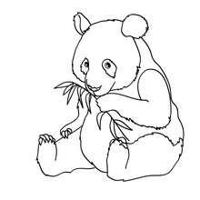 PANDA à colorier - Coloriage - Coloriage ANIMAUX - Coloriage ANIMAUX d'ASIE et OCEANIE - Coloriage PANDA